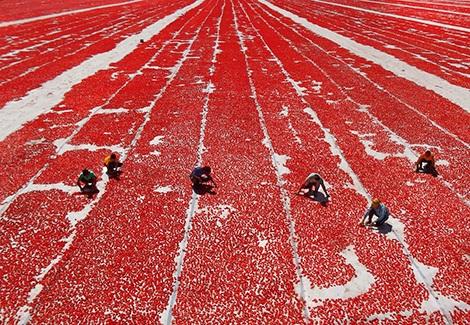Вяленые помидоры с чесноком и ароматными травами
