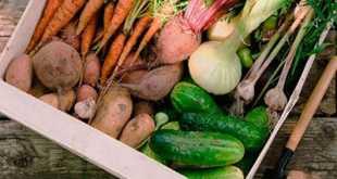 Хранение овощей в квартире