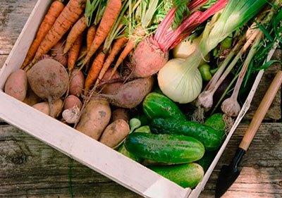 Как хранить овощи и фрукты в квартире